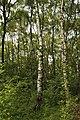 Obersteinbeck Naturschutzgebiet Am Kaelberberg 08.JPG
