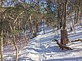 Odaesan Trail.jpg