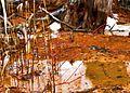 Ohio Valley Mushroom Farm, Acid-Mine Drainage (AMD) (13670955133).jpg