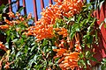 Orange! (32309624868).jpg