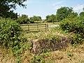 Orchard, Weston Court - geograph.org.uk - 213730.jpg