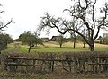 Orchard and farm buildings, Tirley - geograph.org.uk - 698700.jpg