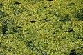 Orsay Parc East Cambridgeshire 2012 07.jpg