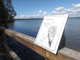 Pine River (Queensland) - Osprey House boardwalk, 2016