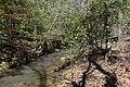 Ouachita National Forest stream.jpg