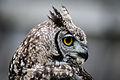 Owls @ Dragonheart, Enschede (9546632861).jpg