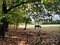 Paardenwei kozakkenput.jpg