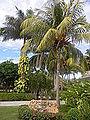 Palma's in Cuba-Laslovarga (9).JPG