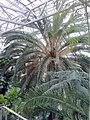 Palmiarnia Zielonogórska - środek 1.jpg