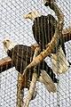 Paphos Zoo, Cyprus - panoramio (30).jpg