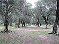 Parc du Pian (Menton).jpg