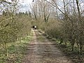 Part of the Circular Walk round College Lake - geograph.org.uk - 1226775.jpg