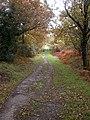 Path back to road from Sharford Bridge - geograph.org.uk - 718090.jpg
