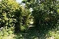 Path in St John, Jersey.jpg