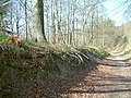 Path in Wendover Woods on Haddington Hill - geograph.org.uk - 8097.jpg
