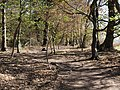Path in the Hambach forest 05.jpg