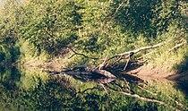 Pedjajoki2.jpg