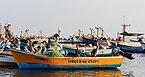 Pelícanos peruanos (Pelecanus thagus), puerto de Paracas, Perú, 2015-07-29, DD 06.JPG