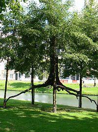 Penone Rotterdam 03.JPG