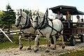 Percherons at Grey Roots, Owen Sound, Ontario 6873 (7496541162).jpg