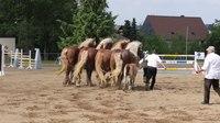 File:Pferdesportveranstaltung 2018 in Seifersdorf. 2H1A8660.webm