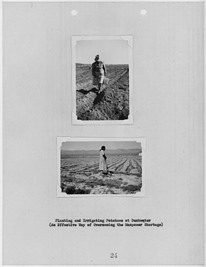 Duckwater Shoshone Tribe of the Duckwater Reservation - Potato farming at Duckwater Reservation, 1942