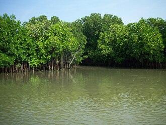 Pichavaram - December green in Pichavaram