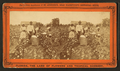 Picking cotton, from Robert N. Dennis collection of stereoscopic views 4.png