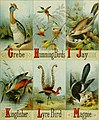 Picture alphabet of birds (1874) (14564976339).jpg