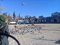 Pigeons in Algeria.jpg