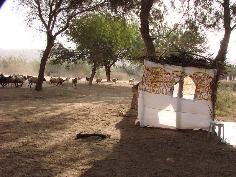 סוכה במדבר ליד אגם ירוחם