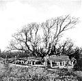 PikiWiki Israel 7502 Gan-Samuel - The Cemetery 1935-40.jpg