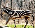 Pittsburgh Zoo (4509214915).jpg
