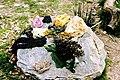 Plant Dyes - Castell Henllys - geograph.org.uk - 938983.jpg