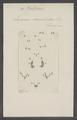 Platycerus - Print - Iconographia Zoologica - Special Collections University of Amsterdam - UBAINV0274 018 13 0059.tif