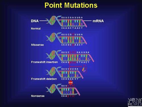 Frameshift mutation - Wikiwand