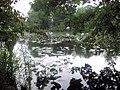 Pond at Glansevern Hall - geograph.org.uk - 1474027.jpg