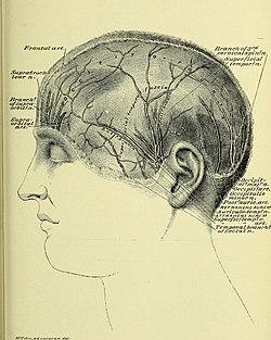 Occipital nerve block - Wikipedia