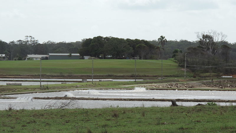 File:Prawn farming, Alberton, 2014.JPG