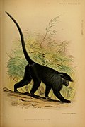 Proceedings of the Zoological Society of London (Mammalia Plate XVI) (7629940316).jpg
