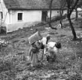 Pustne šeme v Malih Lipljenih 1964.jpg