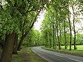 Queens Drive, Sefton Park, Liverpool - DSC05665.JPG