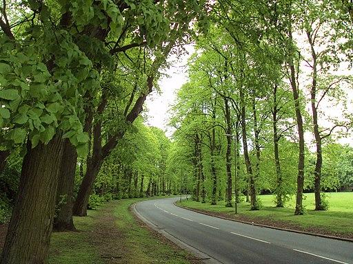 Queens Drive, Sefton Park, Liverpool - DSC05665