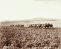Queensland State Archives 3932 Three horse teams ploughing with double furrow ploughs on a 300 acre paddock Canning Downs Station near Warwick 3 May 1894.png