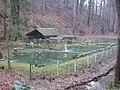 Rathen - Amselsee - Fischteich (Dscn3714).jpg