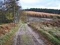Rawnsley Hills, Cannock Chase - geograph.org.uk - 283336.jpg