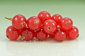 Redcurrant (Ribes rubrum) fruits.jpg