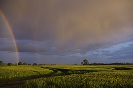 Regenbogenhimmel über Getreidefeld zwischen Wachow und Zachow.jpg