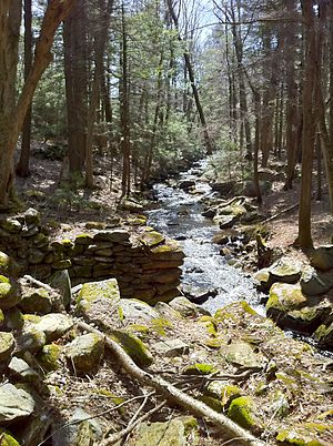 Natchaug State Forest - Image: Remains of old mill dam on Beaverdam Brook taken from northern end of foot bridge