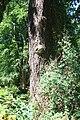 Rhododendronpark Bremen 20090513 070.JPG